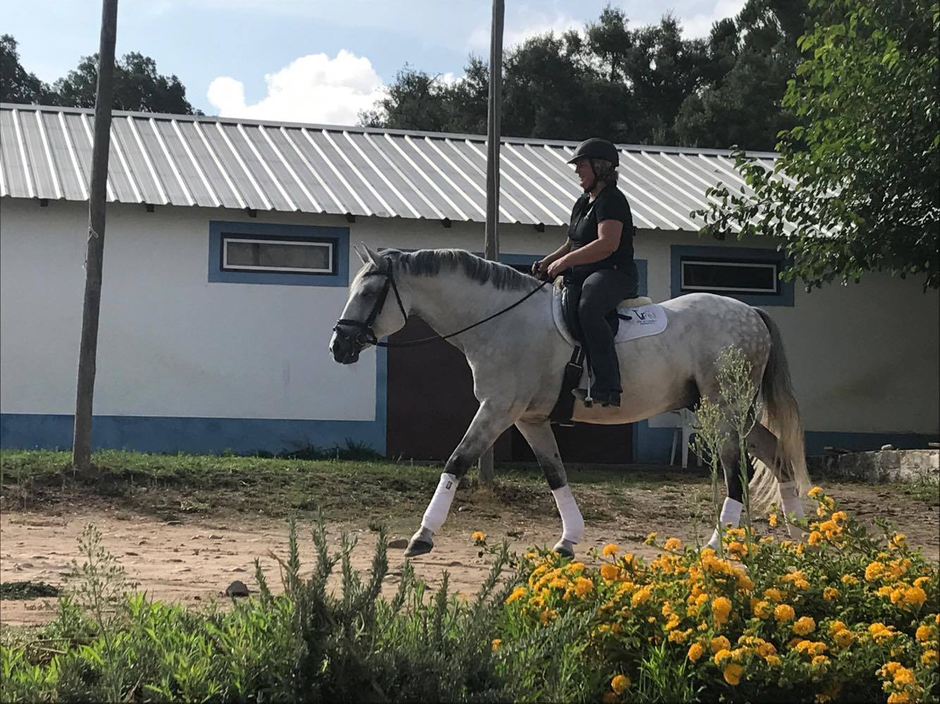 In 2017, I bought a 10-yrs old PSL gelding (breeder Mario Vinhas) in Portugal. Even if this was the first time in my life to have a horse transported across Europe and therefore I have no live experience to compare with, Joao and his team did a job far beyond expectations. First of all, I was very lucky to get a place on the transport within very few days. The paperwork was properly and professionally handled by Joao and the previous owner. During the transport, I knew virtually at all times where my horse is and that everything is fine: during the day, at rest times and during night travels. No need to list up all perfect points, as there is not one point that gets less than six stars from me (Germany, Hanau). Thank you so much and keep up this excellent work!!